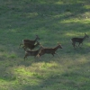 Deers running in the Park